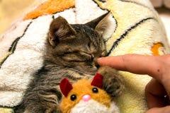 Små gulliga kattungesömnar som kramar den flotta leksaken Royaltyfri Bild
