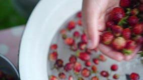 Små jordgubbar för Childs handwashs i bunke Sätter netto bär i en durkslag arkivfilmer