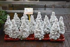 Små julträd som täckas med konstgjord snö Arkivbilder