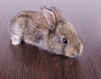 Små kaniner Fotografering för Bildbyråer