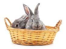 Små kaniner i en korg Royaltyfri Fotografi