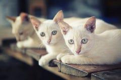 Små katter Arkivbild