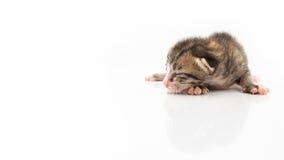 Små katter som ligger på vit bakgrund Arkivbild