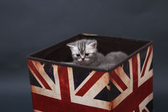 Små kattungar i en fotostudio Royaltyfri Bild