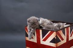 Små kattungar i en fotostudio Arkivfoton