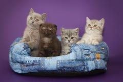 Små kattungar i korg Arkivbilder