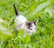 Små kattungar på det gröna gräset Royaltyfri Bild