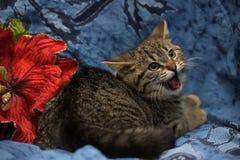 Små kattungeväsande ljud arkivbild