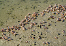 Små krabbor på sandstranden av havet Royaltyfria Bilder