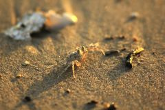 Små krabbor som går på stranden arkivbilder