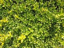 Små lövrika växter arkivbilder