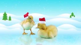 Små nyfödda ankungar i jultomtenhattar som står på isen arkivfilmer