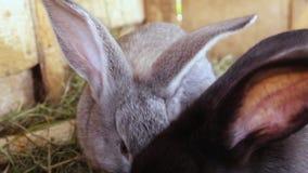 Små olika kulöra kaniner i en bur De äter nytt gräs stock video