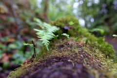 Små ormbunkar växer på en mossig inloggning den gröna skogsbevuxna skogen arkivbild