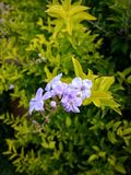 Små purpurfärgade blommor och sidor arkivfoton