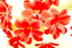 små röda blommor, natur Arkivfoto