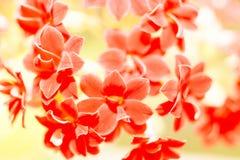små röda blommor, natur Royaltyfri Foto