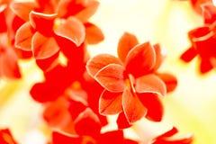 små röda blommor, natur Arkivbilder