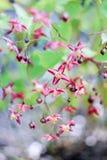 Små rosa färg-Bourgogne blommor Royaltyfri Bild
