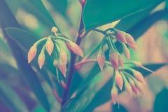 Små rosa färger fjädrar backgroun för fotoet för den nya naturen för blomman utomhus- Royaltyfri Fotografi