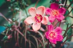 Små rosa färger och orange blommabakgrund Arkivbild