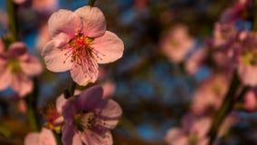 Små skönhetsflar Arkivfoto