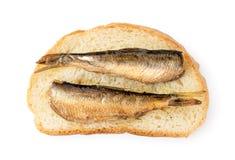 Sm? stackare fiskar p? ett stycke av br?d, sm?rg?s p? ett vitt Formen av ?verkanten royaltyfria foton