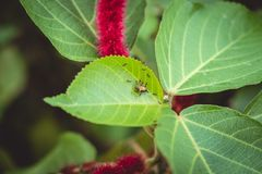 Små svarta myror släpar krypet på växtbladet arkivfoton