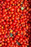 Små tomater som är visat till salu Arkivbild