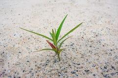 Små träd i öknen Arkivfoton