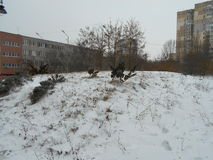 Små träd på en snöig kulle Arkivbilder
