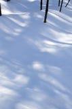 Små träd som gjuter blått, skuggar i snön Royaltyfri Foto