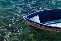 Små träfiskebåtar för nr.-vitblått som står på pir i klart vatten Arkivfoton