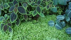 Små växter för botanisk trädgårdmakroplats arkivfoton
