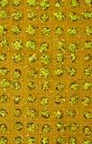Små växter för källkrasse i Hydroponic kultur Arkivbilder