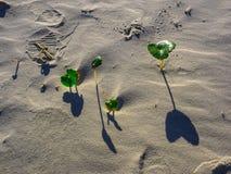 Små växter i sanden royaltyfri fotografi