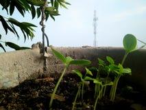 Små växter med bakgrund för antenntorn arkivbild