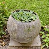 Små växter planterar i vattenkrus i trädgården Arkivbilder