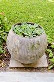 Små växter planterar i vattenkrus i trädgården Royaltyfri Fotografi