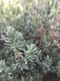 Små växter, vaggar, och smuts Arkivfoton