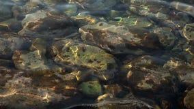 Små vågor på klart längst ner vatten och stenar lager videofilmer
