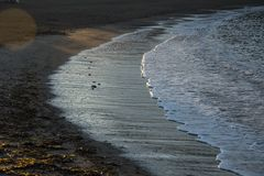små vågor som bryter i sanden på soluppgång royaltyfria foton