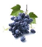 Små våta blåa druvor samlar ihop och sidor som isoleras på vit Arkivbilder