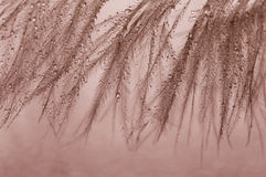 Små vattendroppar på fjädrarna Luftig och delikat makro Arkivbilder