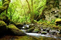 Små vattenfall nära Torc vattenfall, en av mest välkända turist- dragningar i Irland som lokaliseras i den Killarney nationalpark arkivfoto