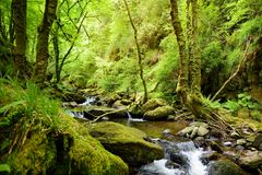 Små vattenfall nära Torc vattenfall, en av mest välkända turist- dragningar i Irland som lokaliseras i den Killarney nationalpark fotografering för bildbyråer