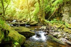 Små vattenfall nära Torc vattenfall, en av mest välkända turist- dragningar i Irland som lokaliseras i den Killarney nationalpark royaltyfri fotografi