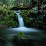 Små vattennedgångar i skogen arkivbilder