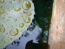 Små vattensmå droppar på bladet royaltyfria foton