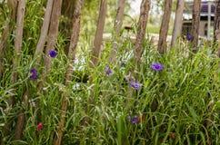 Små violetta sommarblommor Arkivbilder
